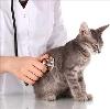 Ветеринарные клиники в Болотном